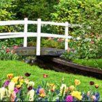 Как красиво оформить цветочные клумбы