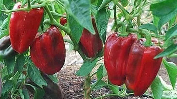Уход за рассадой для хорошего урожая
