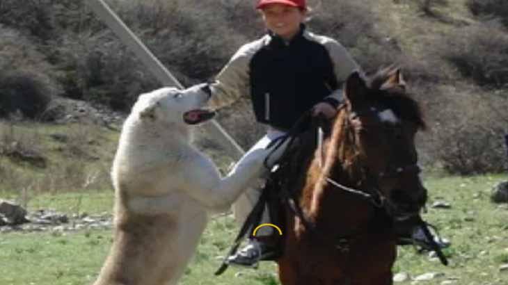 лошадь и алабай