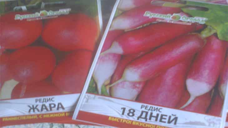 Как вырастить редис в открытом грунте, в теплице, на подоконнике в домашних условиях и получить хороший урожай