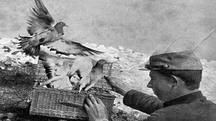 Военные почтовые голуби