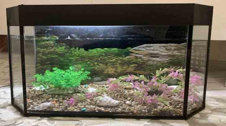 Грунт и декорации в аквариуме