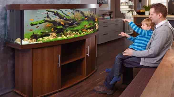 Аквариум для детей. Как выбрать аквариум и как его правильно запустить