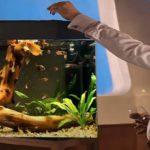 Корм для аквариумных рыбок: виды кормов, как кормить рыбок и сколько раз в день