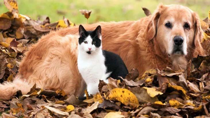 Кот и собака в осеннем саду